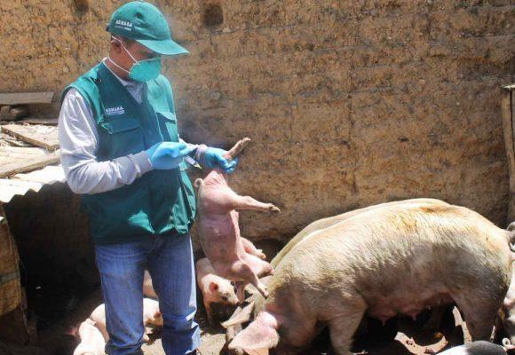 Minagri vacunará miles de cerdos contra PPC y capacitará productores en Junín