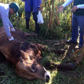 Senasa atendió un brote de rabia silvestre en Ucayali