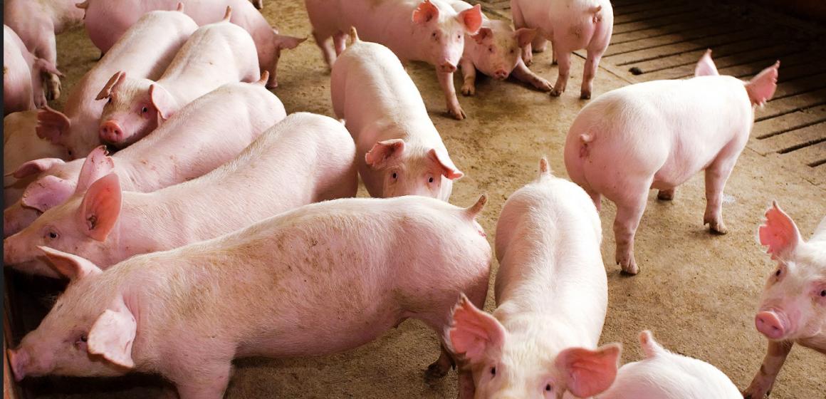 Brasil exporta carne de cerdo a China