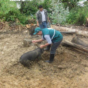 Minagri trabaja para erradicar PPC en Tumbes