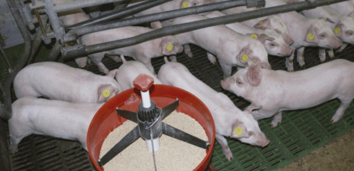 Conociendo un nuevo desafío: las micotoxinas enmascaradas