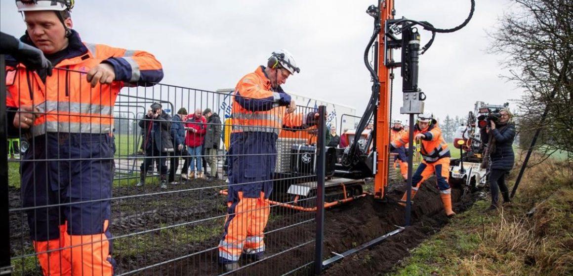 Dinamarca construyó una valla para evitar la entrada de jabalíes