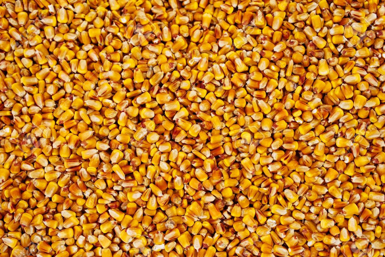 Maize grains texture