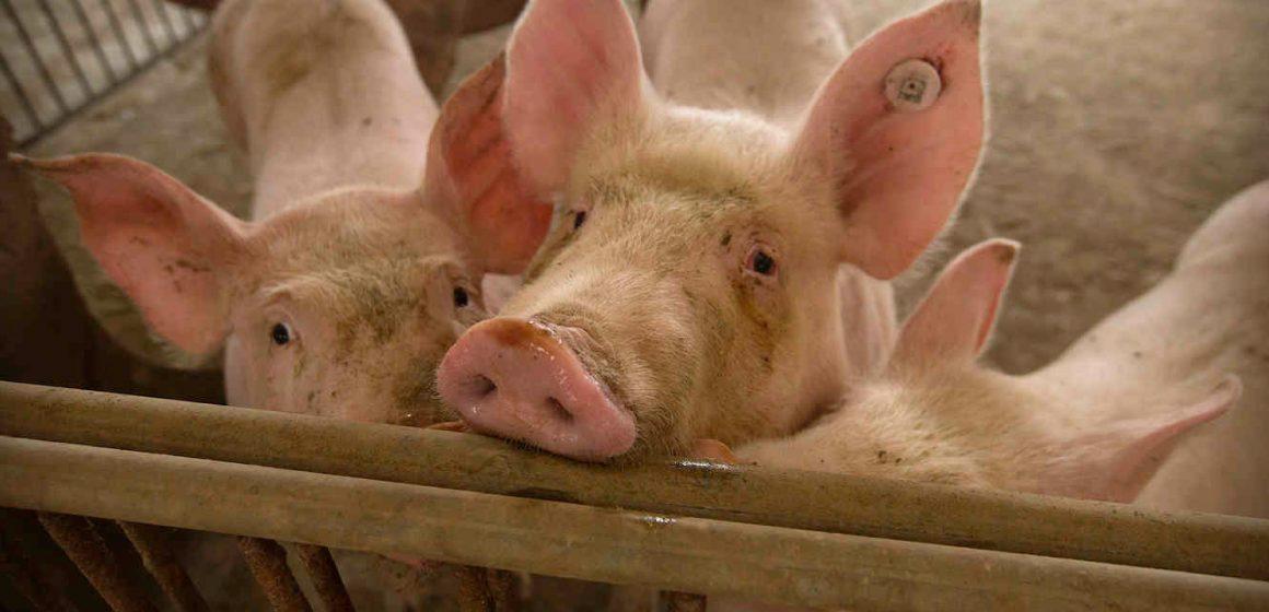 Exportaciones de soya de Brasil serían afectadas por acuerdo comercial entre Estados Unidos y China