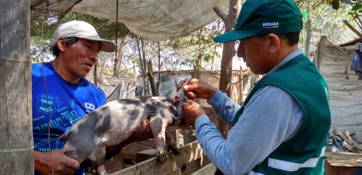 Minagri benefició porcicultores ante PPC en Huánuco