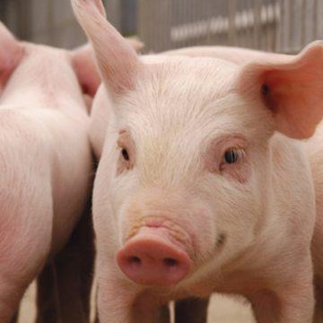 Estados Unidos: carne en almacenes frigoríficos alcanza niveles históricos
