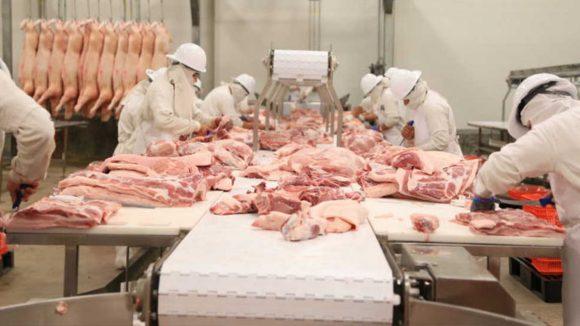 Sigue creciendo producción interna de la carne de cerdo en el Perú