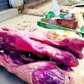 Huancayo: decomisan carne de cerdo en mal estado