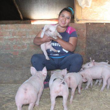 Mujeres son empoderadas en la crianza porcina nacional