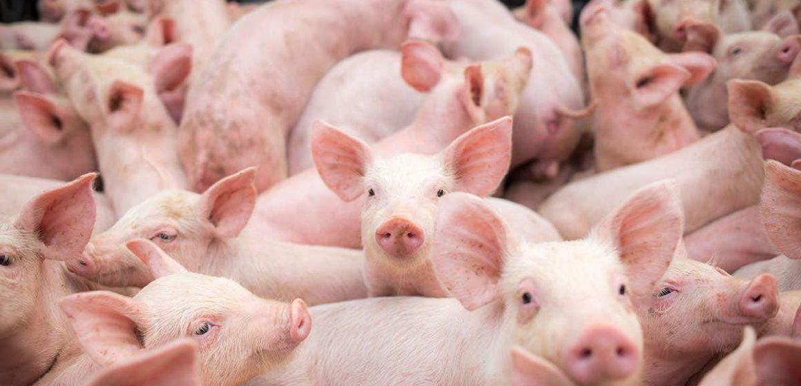 España: producción cárnica creció un 3,1% en el 2019