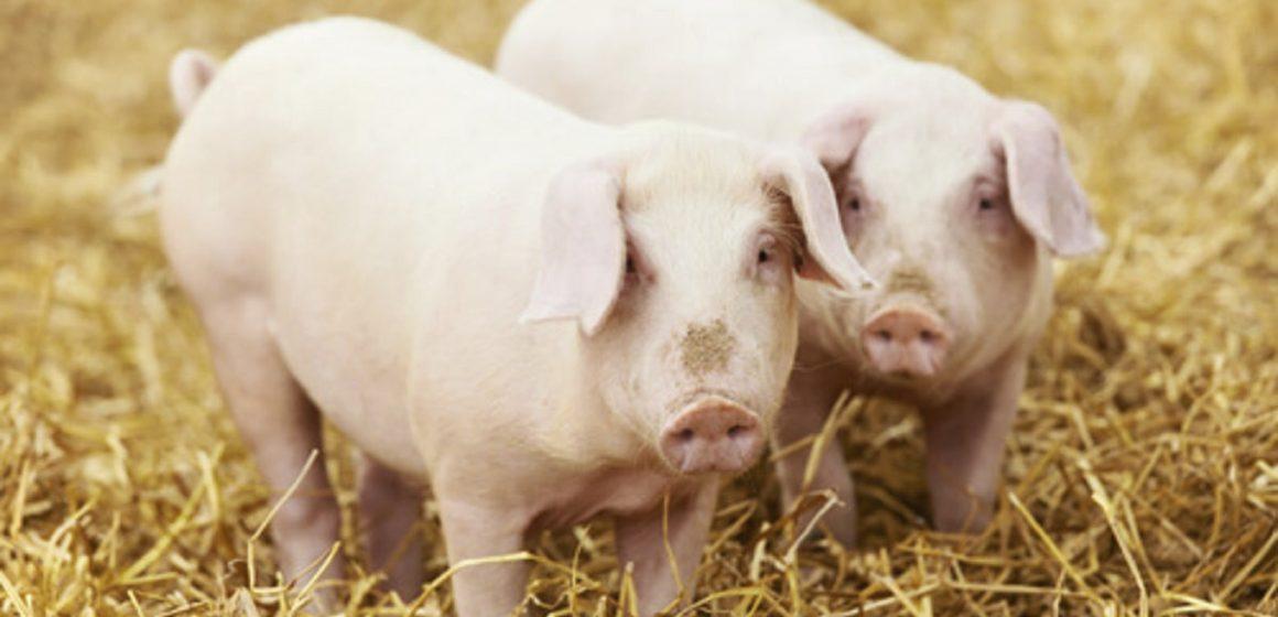 China: destinan 20.000 toneladas de carne a áreas afectadas por Covid-19