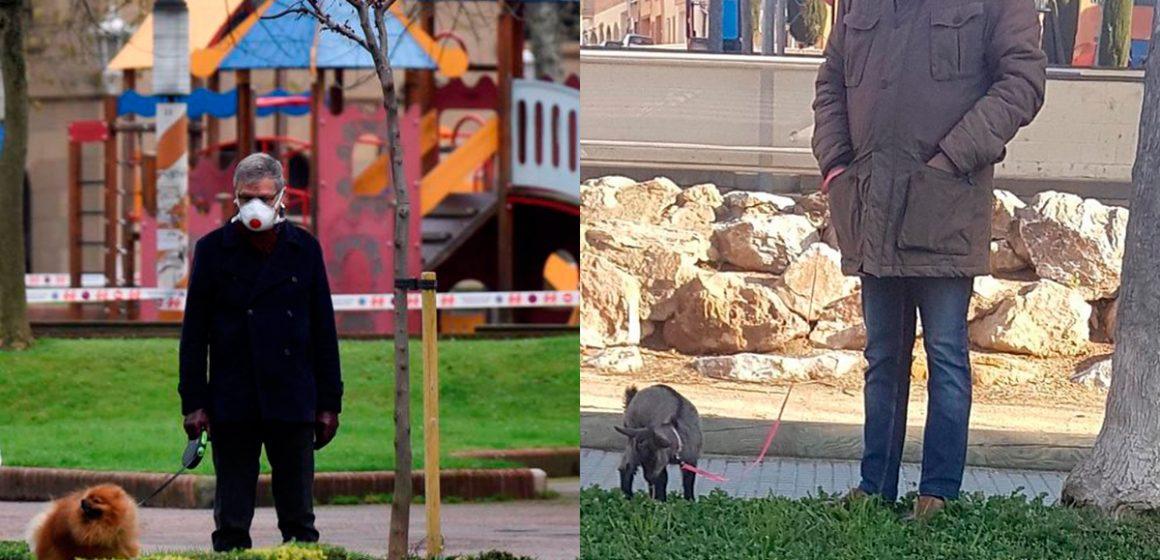 COVID-19: Policía de Barcelona advierte que pasear cerdos burla el confinamiento