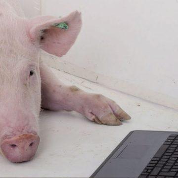Porcicultura 4.0: la nueva revolución de nuestro sector