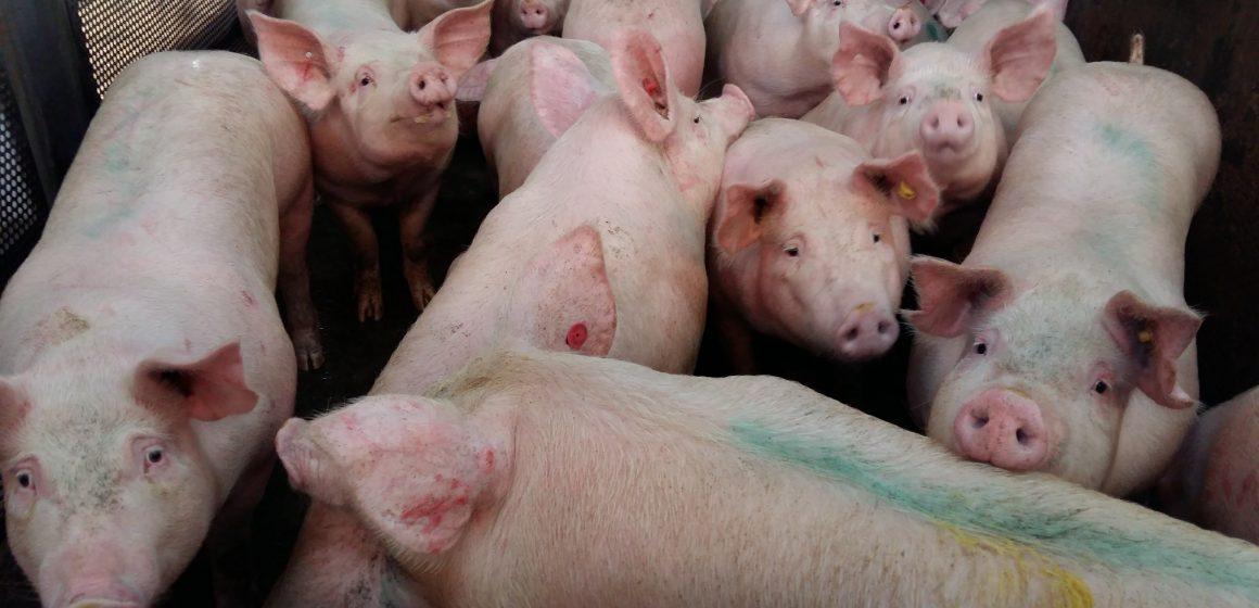 Realizan verificación de condiciones sanitarias a mataderos que abastecen a mercados de Lima