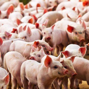 Medidas para una adecuada bioseguridad en granjas