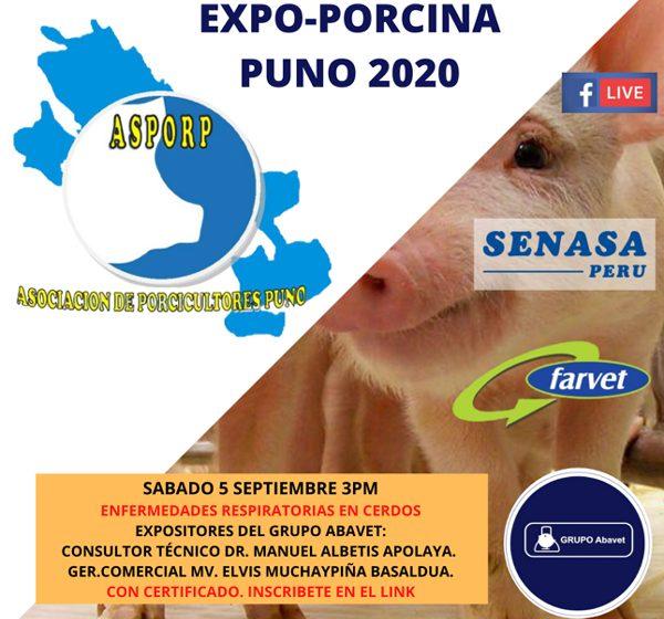 "Realizarán webinar ""Expoporcina Puno 2020, Porcicultura de Altura"""