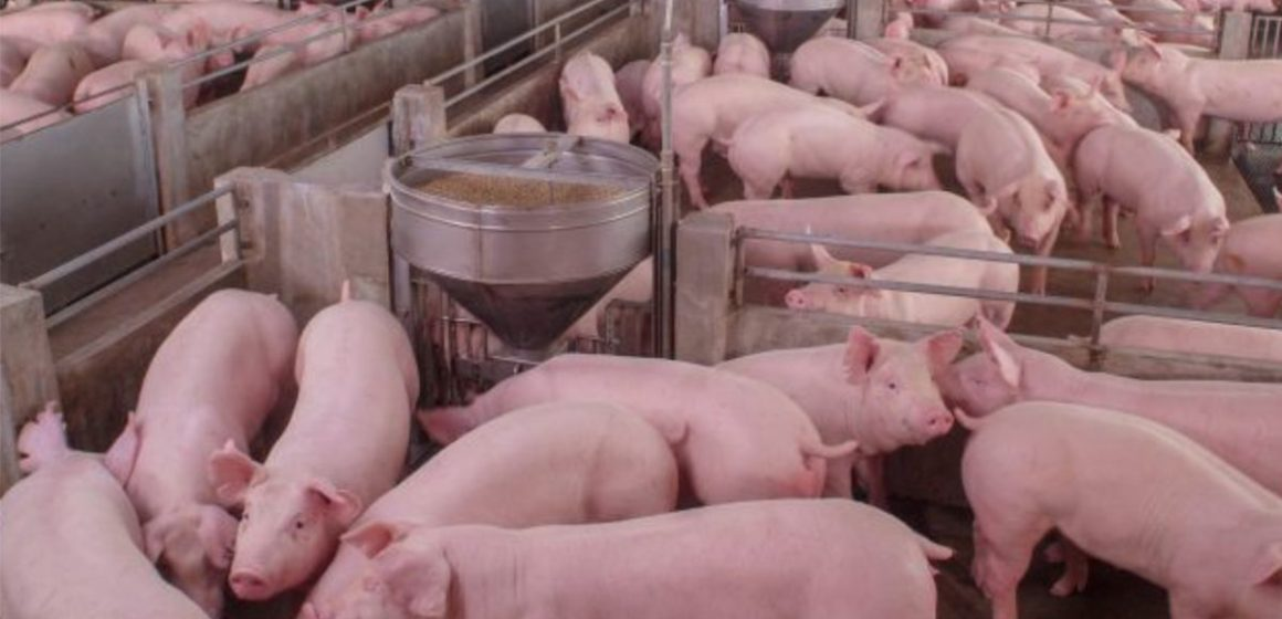 Factores a considerar para mejorar la eficiencia en nuestras granjas