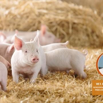 Veterquimica realizó webinar de Introducción al uso de Probióticos en Porcicultura