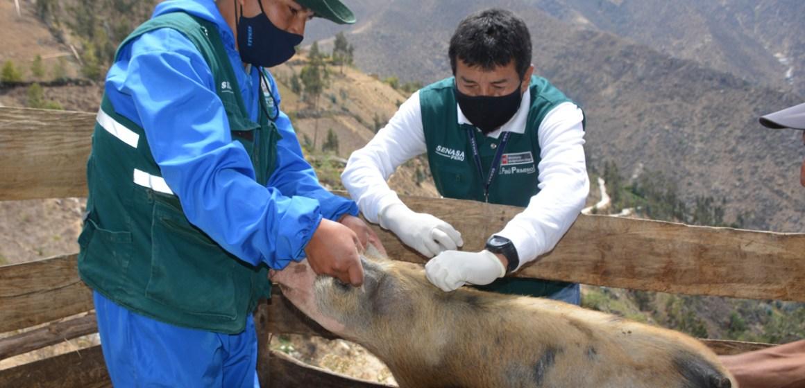 SENASA desarrolló jornada de vacunación en región Ancash