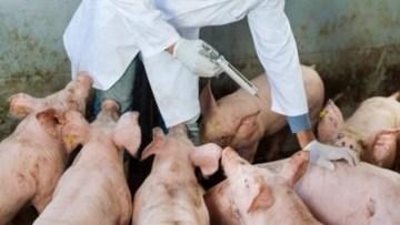 Inicia Semana Mundial de Concientización sobre el Uso de Antimicrobianos
