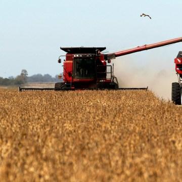 Alza en producción de soja en EEUU impacta en producción porcina latinoamericana