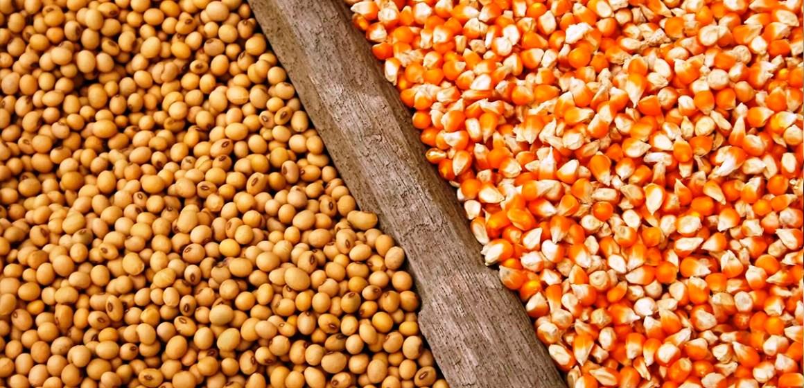 FAO: Precio del maíz y la soja elevan costo de los alimentos a nivel mundial