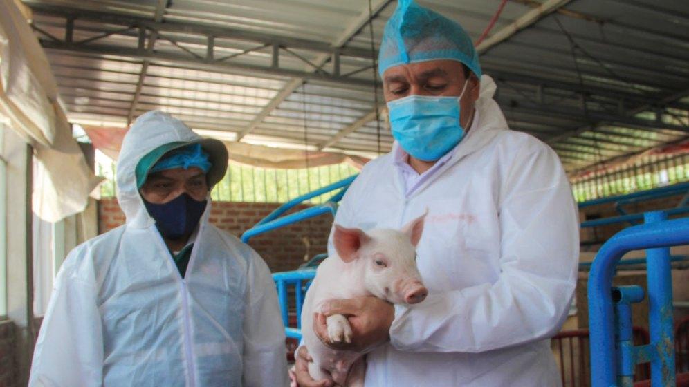 MINAGRI anuncia medidas para resguardar producción porcina nacional ante presencia de peste porcina africana en Europa