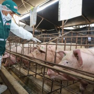 Carne porcina peruana podría ingresar a mercado de China
