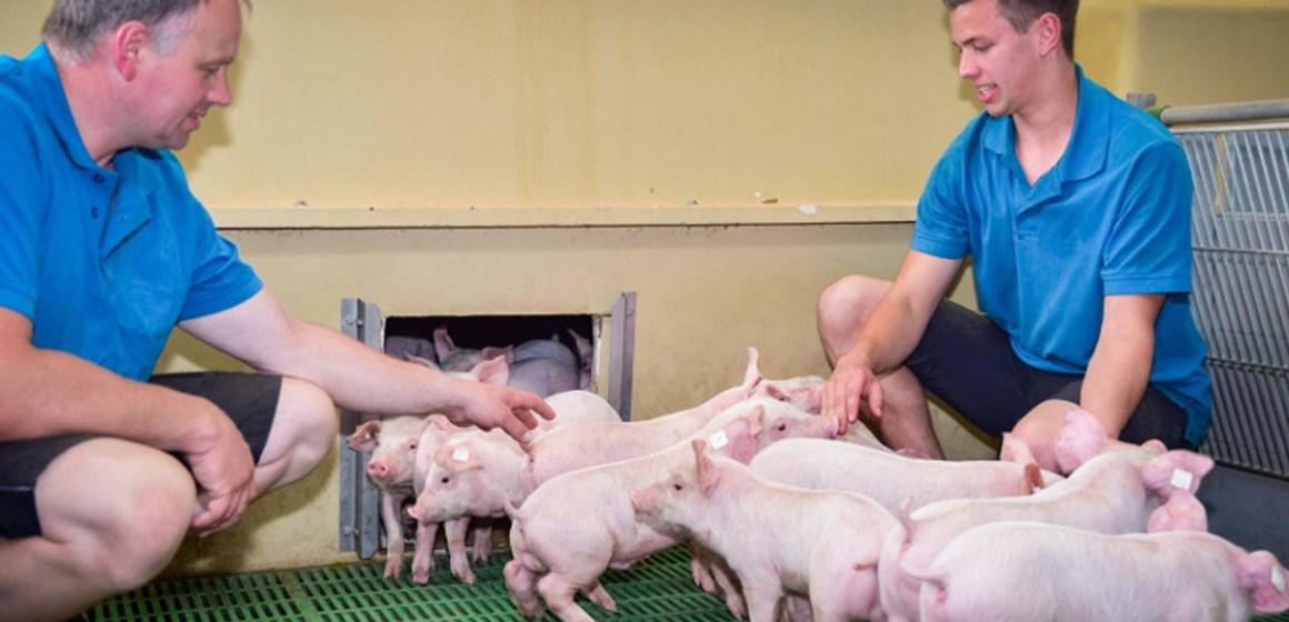 Porcicultura estadounidense redujo en 8% su huella de carbono en los últimos 50 años