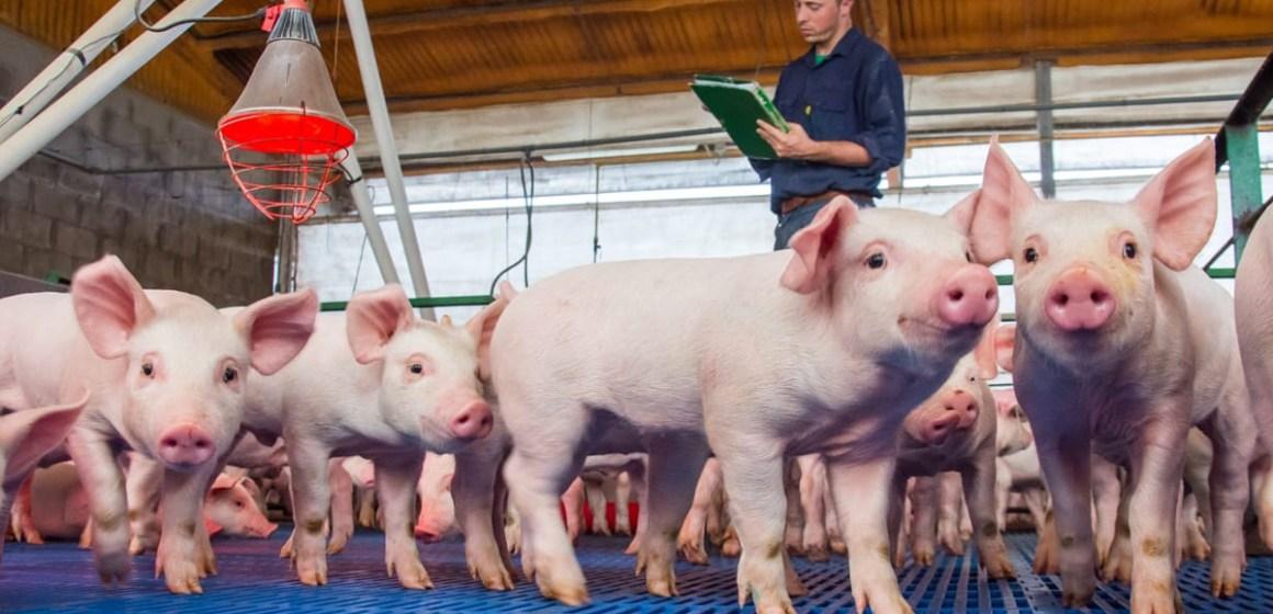 Midagri aprueba seguro que beneficiará a 83,000 productores pecuarios del país