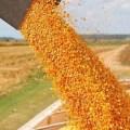 Precios del maíz en Brasil disminuyeron en los últimos días