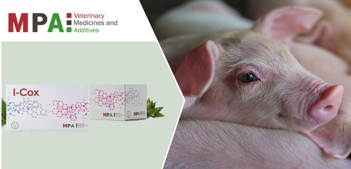 I-Cox, nueva alternativa natural a los fármacos anticoccidiales para lechones