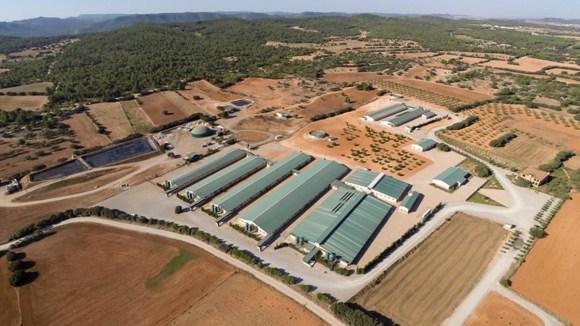 BIOSEGURIDAD en granjas porcinas