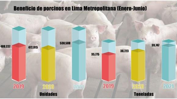 En primer semestre de 2021 se faenó 12% más porcinos que en el mismo periodo de 2020 y 2019