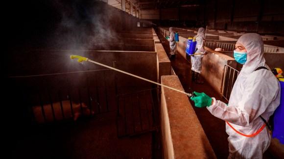 Extremando la bioseguridad ante amenazas reemergentes: el caso de la PPA
