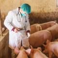 FAO presenta nuevo sistema mundial de información para amenazas de enfermedades animales