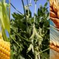 Mundo: producción récord de granos de 2021 sigue siendo menor a las necesidades de la industria