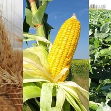 Soya, trigo y maiz suben nuevamente en el mercado internacional